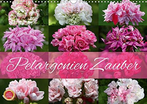 Pelargonien Zauber (Wandkalender 2021 DIN A3 quer)