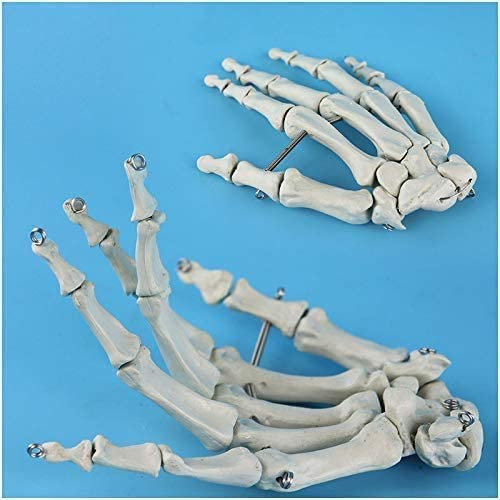 FMOGE Human Palm Bone Model 2021 spring and summer new Anatomical Life-Size Cheap Skeleton Hand -
