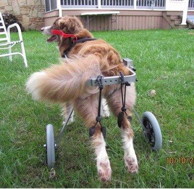 CocoHeart『犬用車椅子』