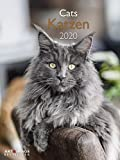 Katzen 2020 A&I - Posterkalender - 48x64cm - Katzenkalender - Tierkalender - Katzen - Wandkalender