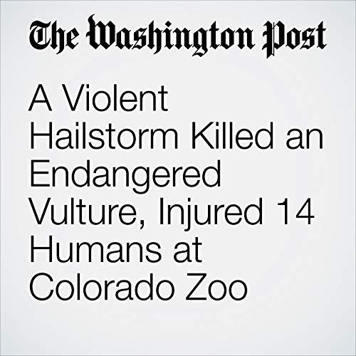 A Violent Hailstorm Killed an Endangered Vulture, Injured 14 Humans at Colorado Zoo copertina