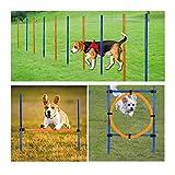 Jlxl Set De Entrenamiento De Agilidad De Perros Al Aire Libre for Mascotas Estable Altura Ajustable De Aro con Bolsa Transporte