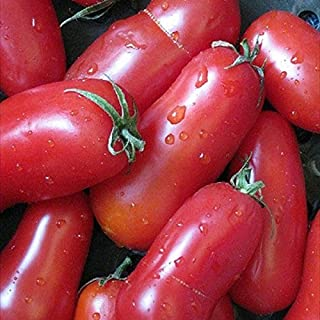 Tomato San Marzano 50 Fresh Heirloom Seeds Super Yummy
