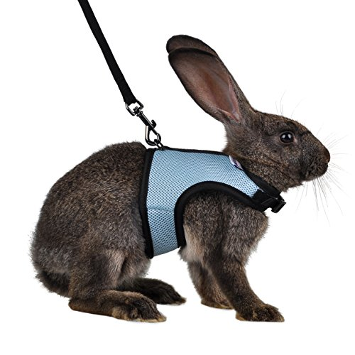 Niteangel Adjustable and Breathable Mesh Harness with Lead for Rabbit (S, Blue)