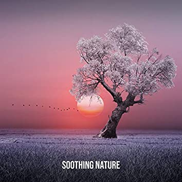 Soothing Nature: Inner Harmony You Need, Clear Your Mind in a Natural Environment, Pure Life