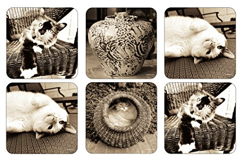 Pimpernel Kitty Club Coasters S/6 4.25 by Pimpernel