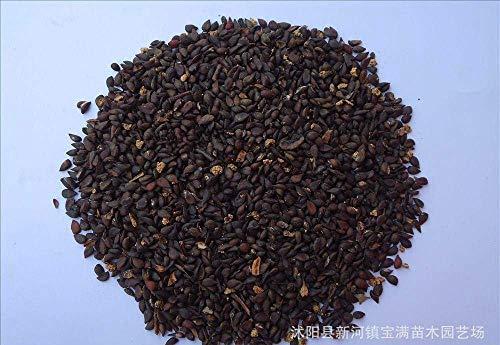 Weiß-rosa schwarze Stechapfel-Samen, Brugmansia-Engels-Trompeten, Bonsai-Baum-Blumensamen 50 Partikel/Los g65