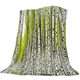 Lightweight Cozy Bed Blanket Throw Fuzzy Super Soft and Warm Throw Flannel Blankets for Couch Sofa Bed Beach Travel,White Birch Forest Green Leaves Summertime Wildlife Nature Themed (51 x 63 Inches)