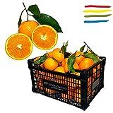 """Arance di Sicilia """"Navel"""" KG 16 - non trattate e non cerate - buccia edibile - ottime da mangiare o per preparare aranciata o marmellata artigianale di arancia fresca e genuina.(Calibro Misto)"""