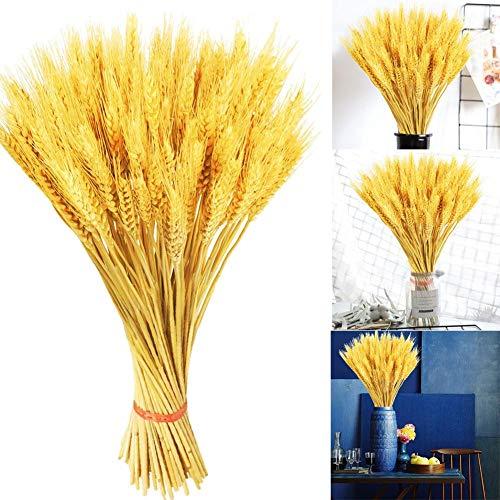 100 Stängel getrocknete Weizenstiele, goldgetrocknete Weizengarben, Herbst Arrangement Weizenstrauß Bündel Blume für DIY Hochzeit Weihnachten Tischdekoration