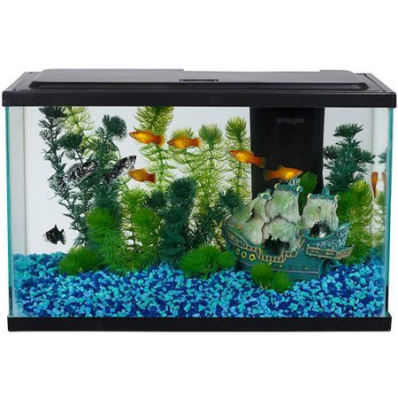 Best Small Tropical Aquarium Fish