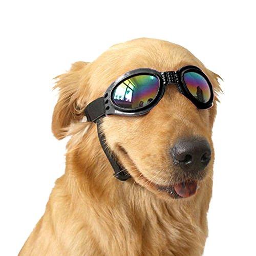 Gafas de sol para perro