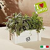 Caja decorativa de madera para hierbas aromáticas con semillas de salvia de menta (ancho x profundidad x alto)