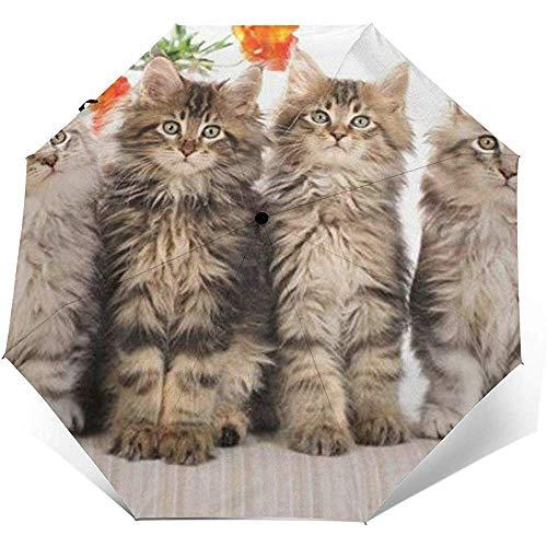 Maine Coon Kittens Folding Compact Regenschirm wasserdicht-Sun Block-Auto Open&Close (schwarzer Kleber)