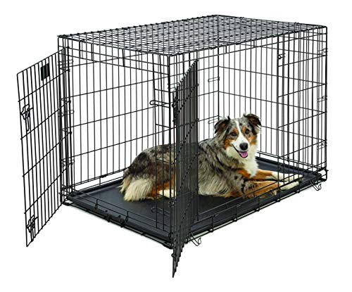 Large Dog Crate | MidWest Life Stages Double Door Folding Metal Dog Crate | Divider Panel, Floor Protecting Feet, Leak-Proof Dog Tray | 42L x 28W x 31H Inches, Large Dog Breed