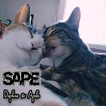 Daphne & Apolo