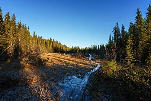 LFNSTXT Rompecabezas para adultos, 1000 piezas, Norway Forests Spruce Trail Jigsaw Puzzle para adultos, familias y niños. Juguete educativo para decoración del hogar (75 x 50 cm)
