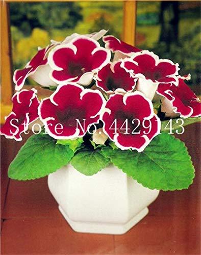 RETS 100 PC-Gloxinie Sinningia speciosa Indoor Bonsai Pflanzen Mix Farben Perennial Schöne Blume für Hausgarten-Zubehör: 7