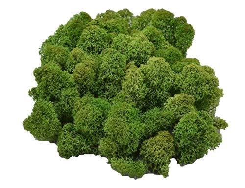 Muwse Island-moos V 50g Tannen-grün händisch vor-gereinig präpariert gefärbt weich haltbar. Deko-moos Floristik-moos Bastel-moos Modellbau-moos Rentier-moos Iceland-Moss