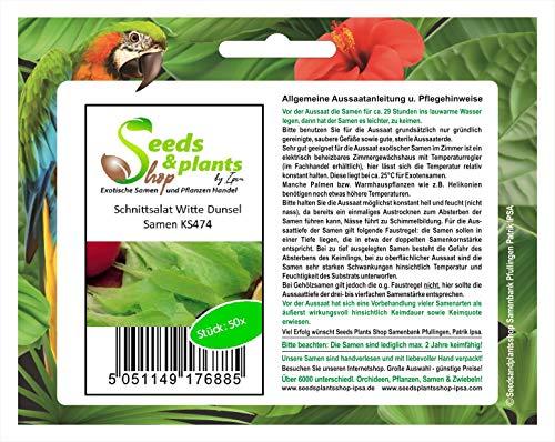 Stk - 50x Schnittsalat Witte Dunsel- Salat Samen Gemüse KS474 - Seeds Plants Shop Samenbank Pfullingen Patrik Ipsa