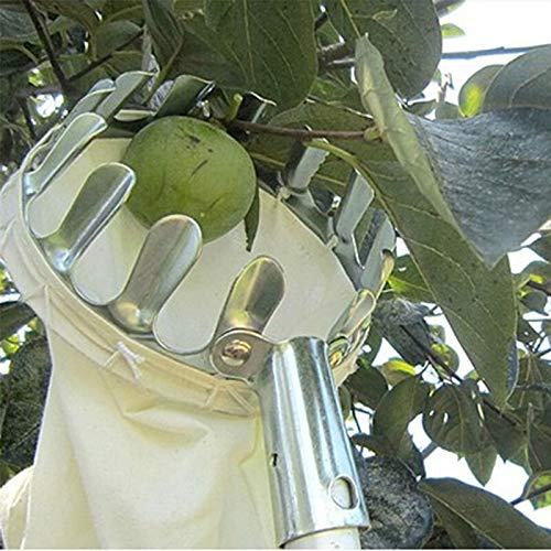 Abracing Fruit picker Orchard picking tool Fruit picker silver metal device for harvesting fruit, gardening tools, pruning, hand tools without post
