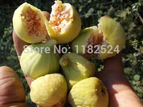 100% d'origine fraîches rares Graines Ficus Carica Fig Fruit Tree limitées Nouveautés Graines de légumes Plats