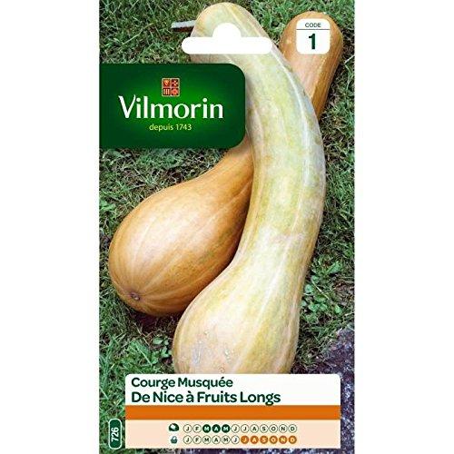 VILMORIN COURGE DE NICE A FRUIT LONG