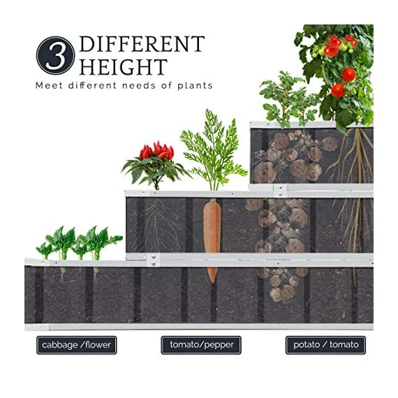 KING BIRD 3 Tiers Raised Garden Bed Dismountable Frame Galvanized Steel Metal Patio Garden Elevated Planter Box 46''x46… 2 【Use it as 3 Individual Raised Bed】--- Each tier is connected by the fastener connectors, and you can take the connectors down to make the whole raised bed to 3 individual raised garden bed and get more cultivated area. Or used as 3 tiers raised bed to plant 3 different needs plants. Capacity 21 Cu Ft of Soil 【THREE YEARS WARRANTY】--- The most wonderful design of our KING BIRD raised garden bed is not only about the convenient and fast installation without tools, also for its smart design to vastly increase the loading ability and capacity. THREE YEARS WARRANTY for the whole raised bed. 【Multilayer Galvanized Paint】--- Upgraded multilayer galvanized paint efficiently prevents rust and continues to beauty; also never worry about that the rain damage the wood garden bed; galvanized steel garden bed provides a lasting use and no discoloration. No painting inside, no worries about the damage for plants.
