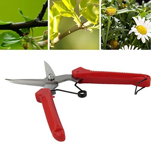 DIY Plante élagage Ciseaux Jardin Cisailles Cutter Fleur à la main Sécateur Outil Arbre à fruits Lame Jardin Lot d'outils de coupe