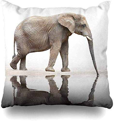 ZLXIONG Throw Pillow Covers Desert Jungle Drinking Elephant Loxodonta Africana Wildlife Nature Water Oasis Wild Snout Home Decor Cushion Cover Pillowcase,45X45Cm