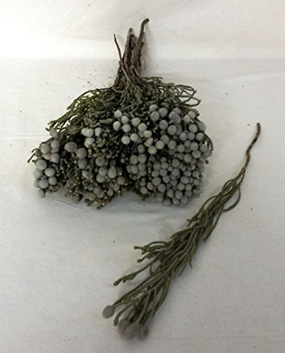 Flores Frescas Online Ramo de Brunia Seca Portes Gratis