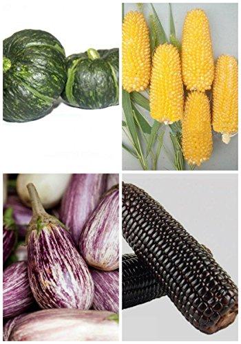 Germination Rare 95% + 6 Groupes Pour Select Graines de fruits 4 en 1 Lot Garden Hot 2017 1 Nutritif