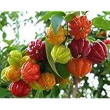 20PCSピタンガ種子、Pitangaの果物の種、ブラジルチェリー{赤}、ホーム&ガーデンのためにレアプラント