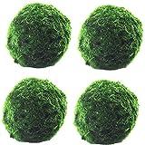 Marimo Moss Balls Live, 2/4 Pcs Dried Moss Balls(4cm/1.57inch) - Natural Green Moss Balls Water Purification Decorative Fish Shrimp Tank Aquatic Plant Ornament (4pcs)