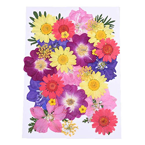Wohlstand Flor prensada mezclada Flores secas Flores secas Naturales orgánicos Mezclados Flor Naturales Naturales DIY Arte Decoraciones Florales colección Regalo Scrapbooking Arte Manualidades