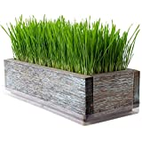 Reclaimed Barnwood Style Planter Wheatgrass Kit - Aged Brown - Grow Wheat Grass - for Pet/Dog/Cat Grass - Decorative & Ornamental - Juice - Organic Seeds