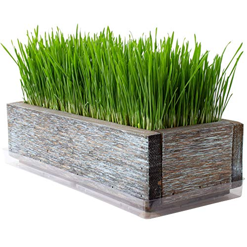 Reclaimed Barnwood Style Planter Wheatgrass Kit - Aged Brown - Grow...