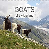 Goats of Switzerland (Wall Calendar 2021 300 × 300 mm Square): This calendar shows the colorful diversity of Swiss goats (Monthly calendar, 14 pages )