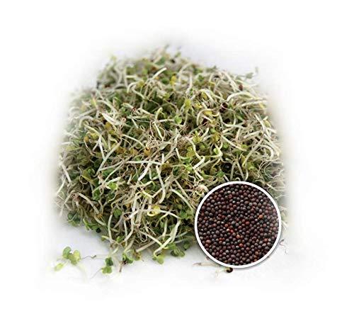 BIO Keimsprossen Brokkoli Raab Brokkoletti 100 g Samen zur Sprossenzucht Sprossen Microgreen Mikrogrün