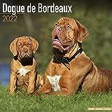Dogue de Bordeaux - Bordeauxdoggen 2022 - 16-Monatskalender: Original Avonside-Kalender [Mehrsprachig] [Kalender]: Original BrownTrout-Kalender (Wall-Kalender)