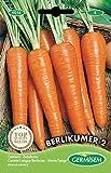 Germisem Berlikumer 2 Semi di Carota 10 g