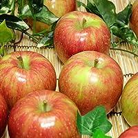 【家庭用】有機りんご サンふじ 10kg箱 有機JAS (青森県 北上農園) 産地直送 ふるさと21