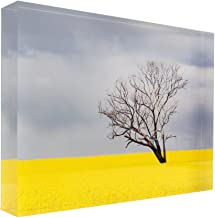Tree Without Leaves in canola Crop During Storm Acrylic Block Photo Print Carl Chapman 3742 (30x20x4cm (12x8x1.6in))