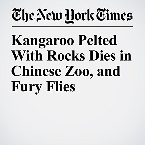 Kangaroo Pelted With Rocks Dies in Chinese Zoo, and Fury Flies copertina