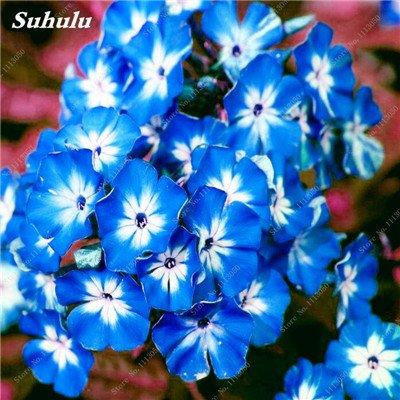 150 Pcs Nerium Graines Oleander plantes en pot semencier japonais Jardin Décoration Bloom Graine Facile à cultiver purifient l'air 3