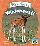 It's a Baby Wildebeest! (Baby African Animals)