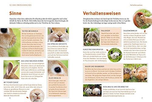 Spiel- und Wohnideen für Zwergkaninchen (GU Tier aktiv) - 4