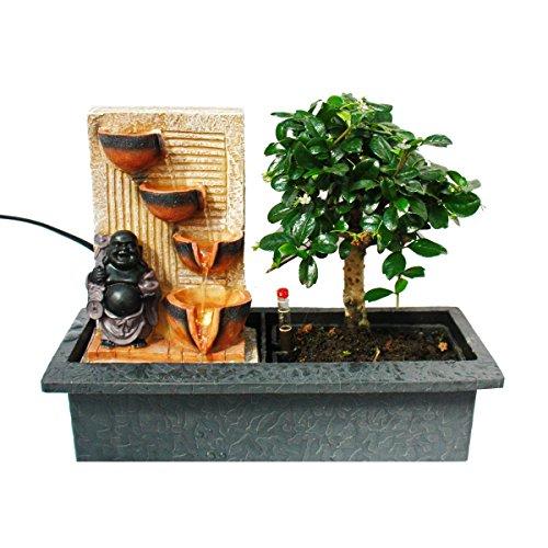 """Exotenherz - Indoor-Bonsai mit Zimmer-Brunnen""""Buddha mit 4 Schalen"""" - beleuchtet - Easy Care System"""