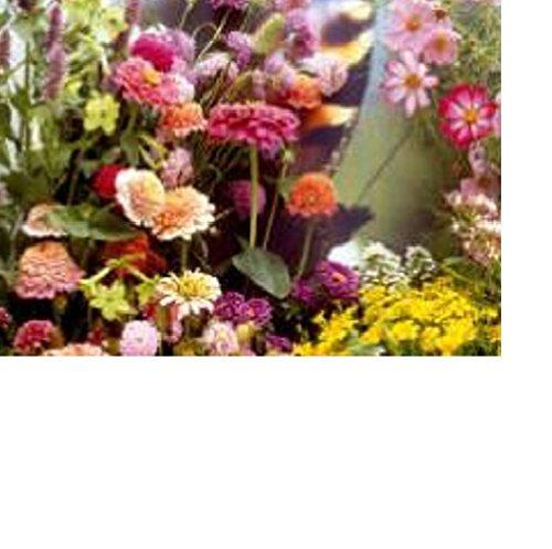 100 graines semences mélanges de fleurs + herbes aromatiques pour charmer les papillons abeilles