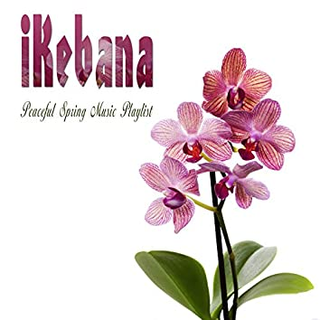 Ikebana Peaceful Spring Music Playlist